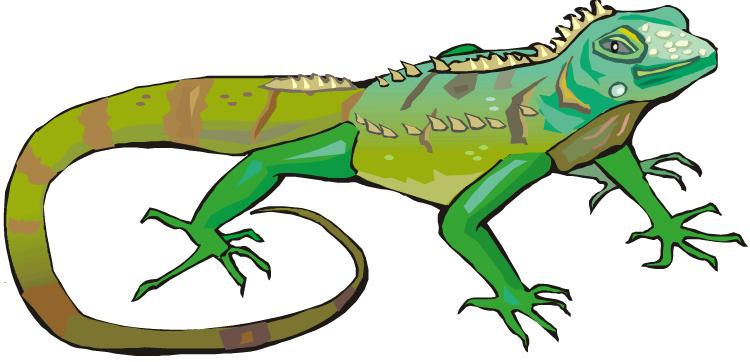 Iguana Clipart Iguana11 Jpg