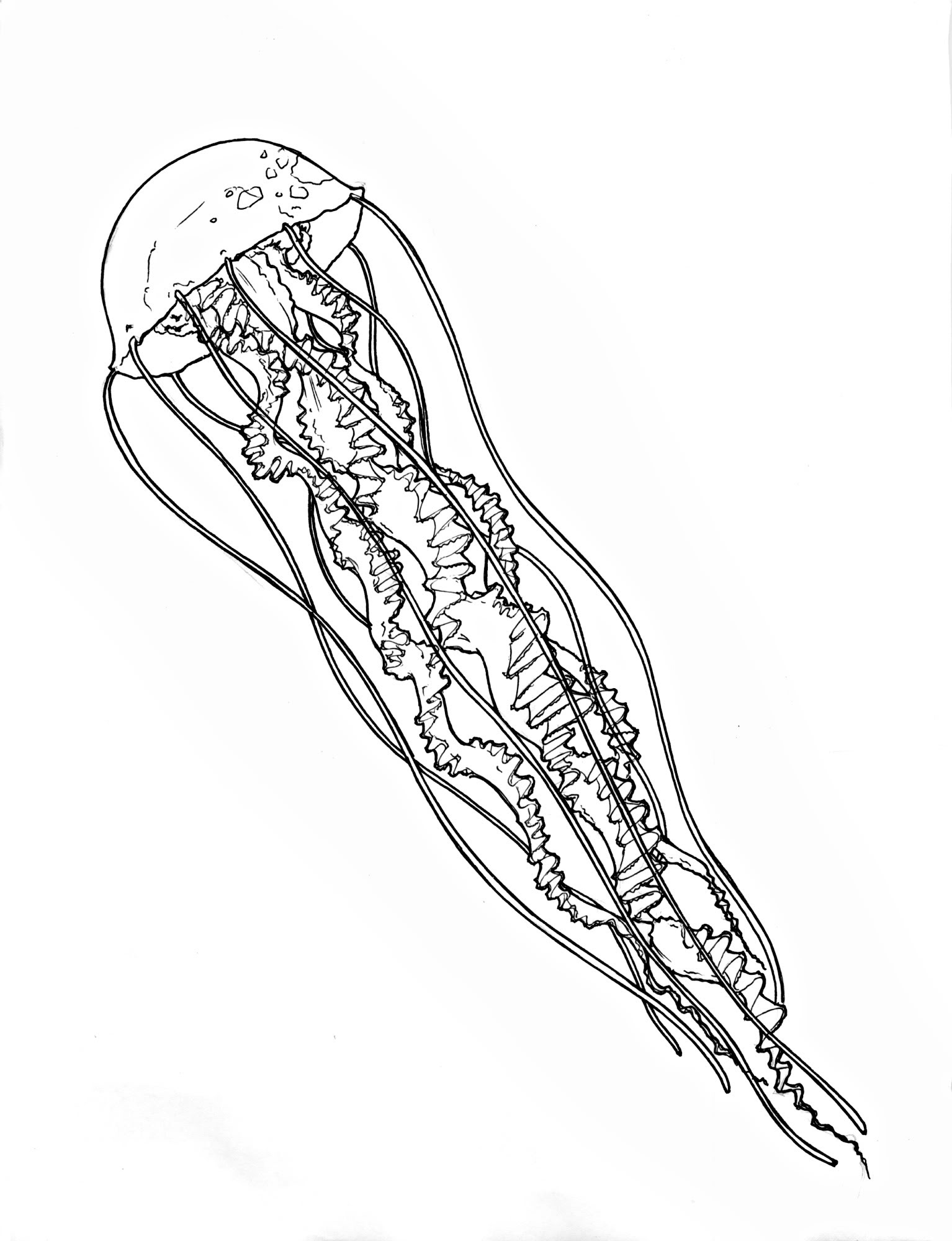 Jellyfish Line Art : Jelly fish outline clipart suggest