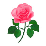 Single Pink Rose Clipart - Clipart Kid