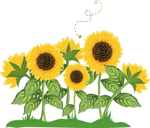 Clip Art Images Sunflowers Stock Photos   Clipart Sunflowers Pictures