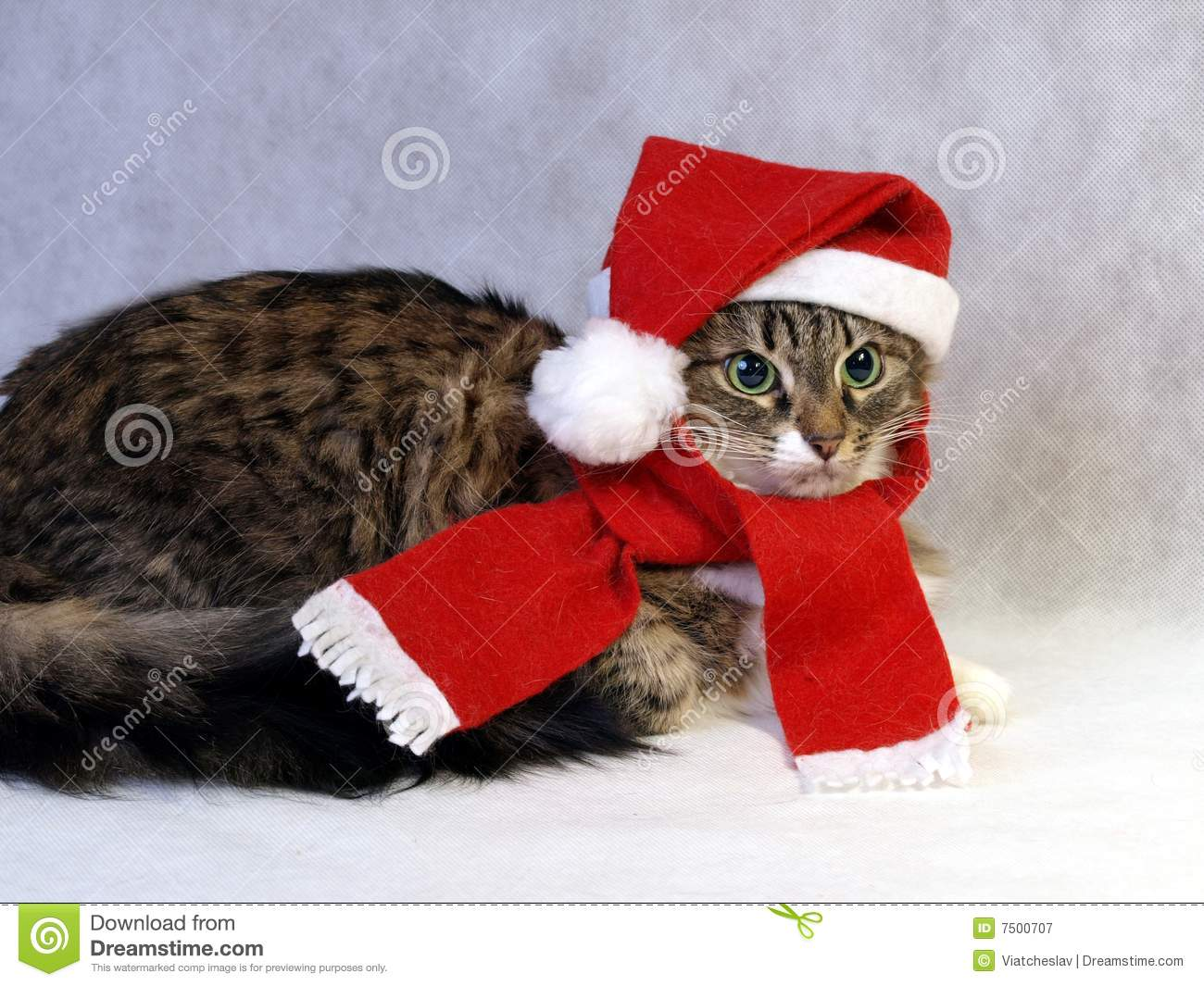 Norwegian Christmas Cat Royalty Free Stock Photography   Image