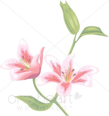 Clip Art Lily Clip Art tiger lily clipart kid calla cala clipart