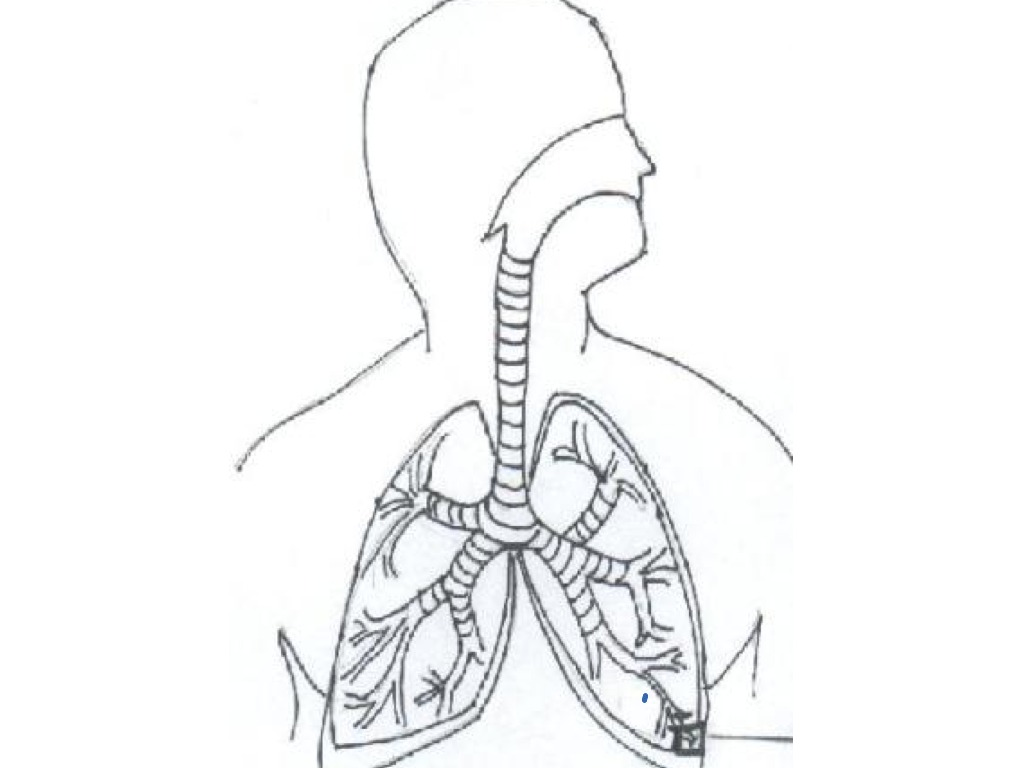 respiratory system clipart