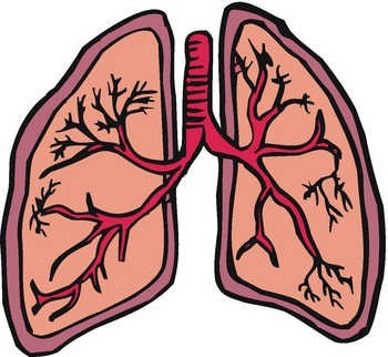 Respiratory System Pictures For Kids   Clipart Best