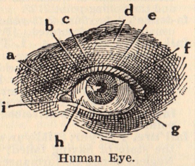Piece Of Clip Art That Features A Diagram Of The Human Eye