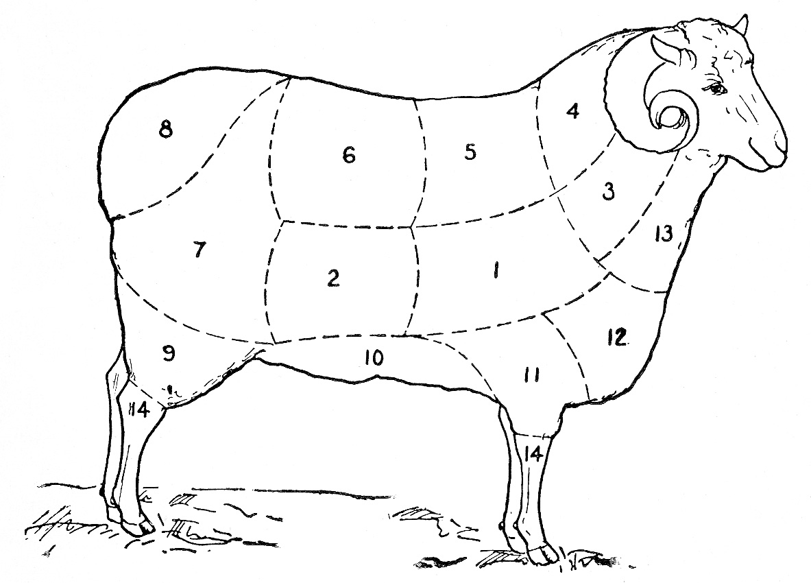 Vintage Clip Art   Sheep Diagram   The Graphics Fairy