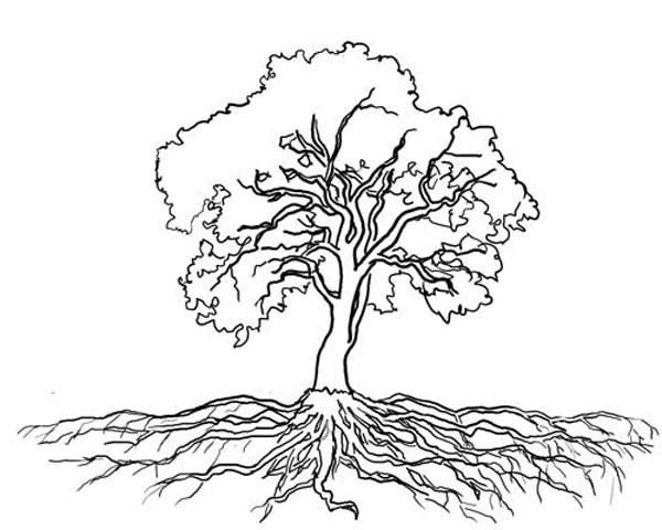 Tree Outline With Roots Oak Clipart Kid