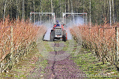 Farmer Sprays Chemicals On His Blueberry Crop To Prevent Mold Or