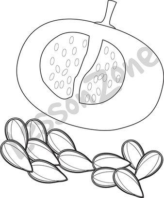 Pumpkin Seed B W