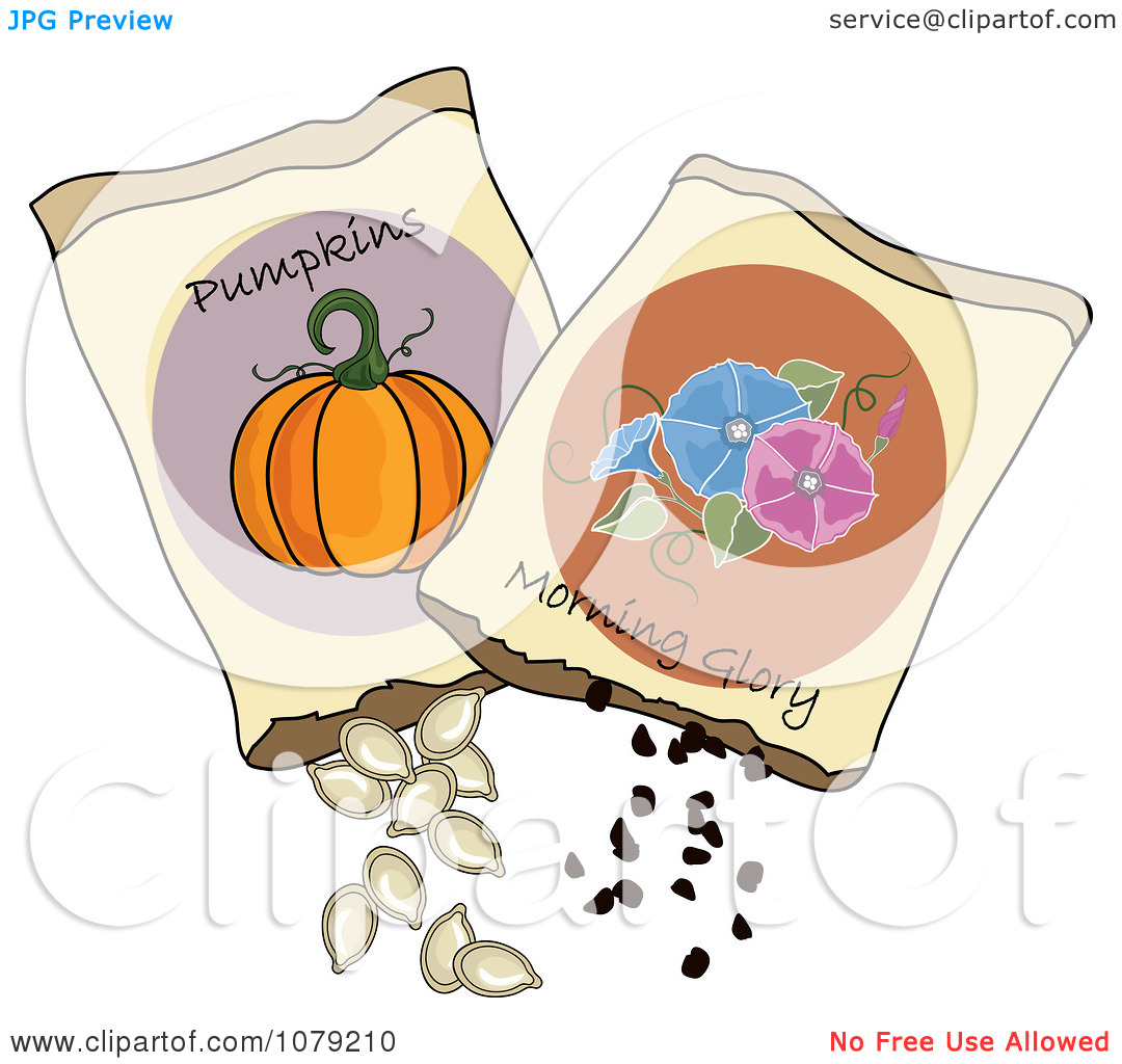 Pumpkin Seed Clipart   Clipart Panda   Free Clipart Images