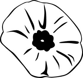 Search Terms  Black And White Blossom Flower Poppy