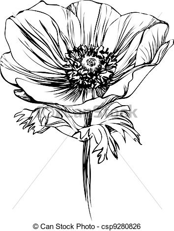 Stalk   Black And White Picture Poppy    Csp9280826   Search Clipart