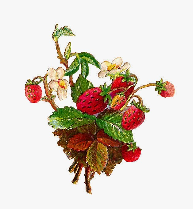 Antique Images  Free Fruit Clip Art  Strawberries And Strawberry