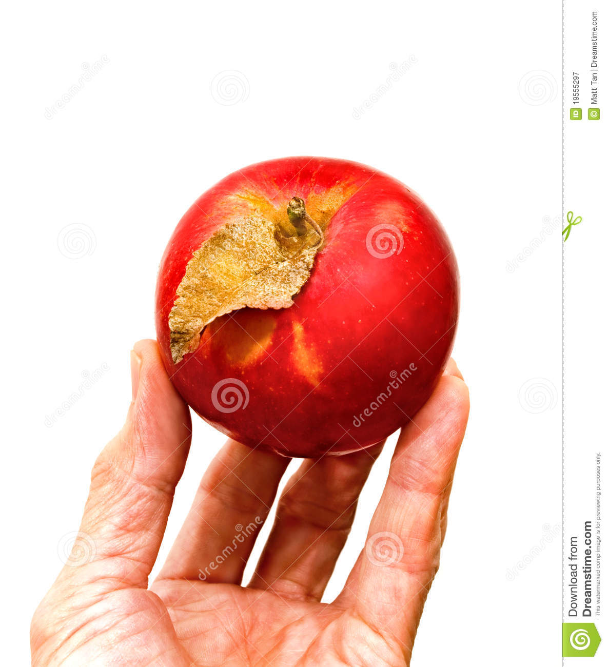 Apple Picking Season Is Here  Summer Warm Weather Outdoors Work And