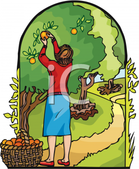 Royalty Free Orchard Clipart