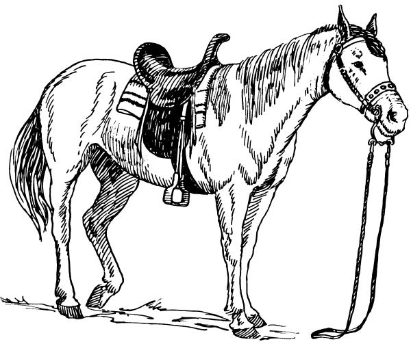 Bronc Horse Clipart - Clipart Kid
