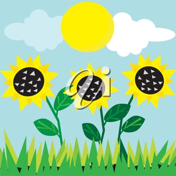 Sunflower Field Clipart - Clipart Kid