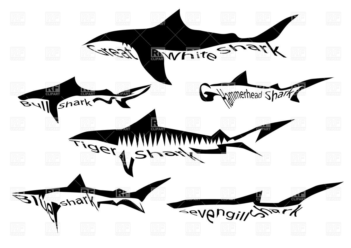 Species Of Shark   Silhouette Of Sharks Isolated On White Download