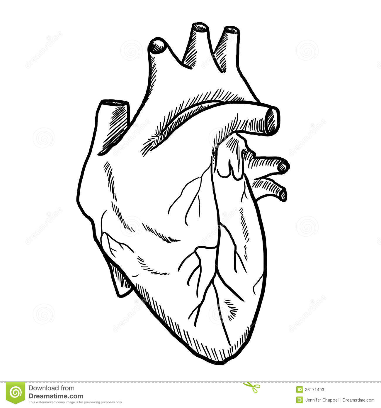 Simple Human Heart Drawing