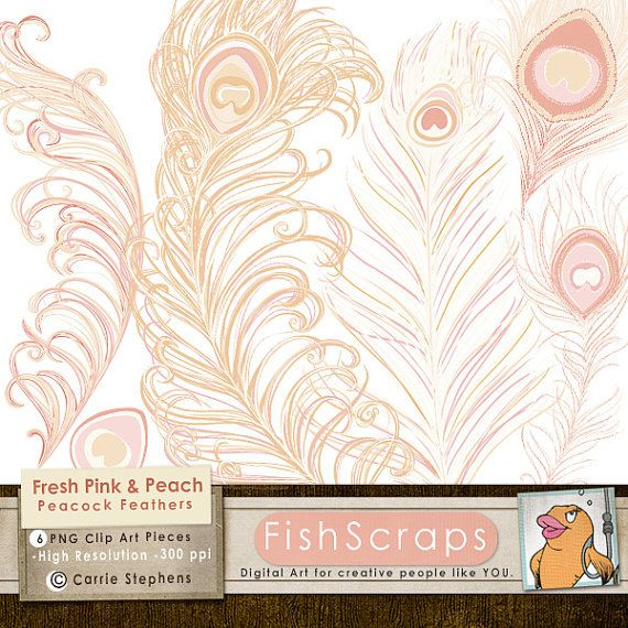 Pink Peacock Feather Clip Art   Romantic Pastel Pink   Peach Feathers