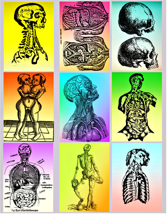 Human Anatomy Clipart - Clipart Suggest