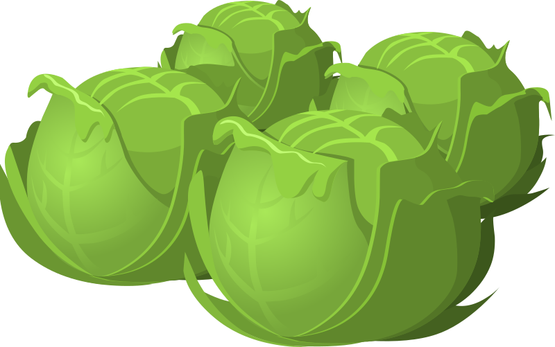 Food Cabbage