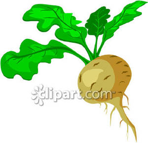 Rutabaga With Leaves Attached   Royalty Free Clipart Picture