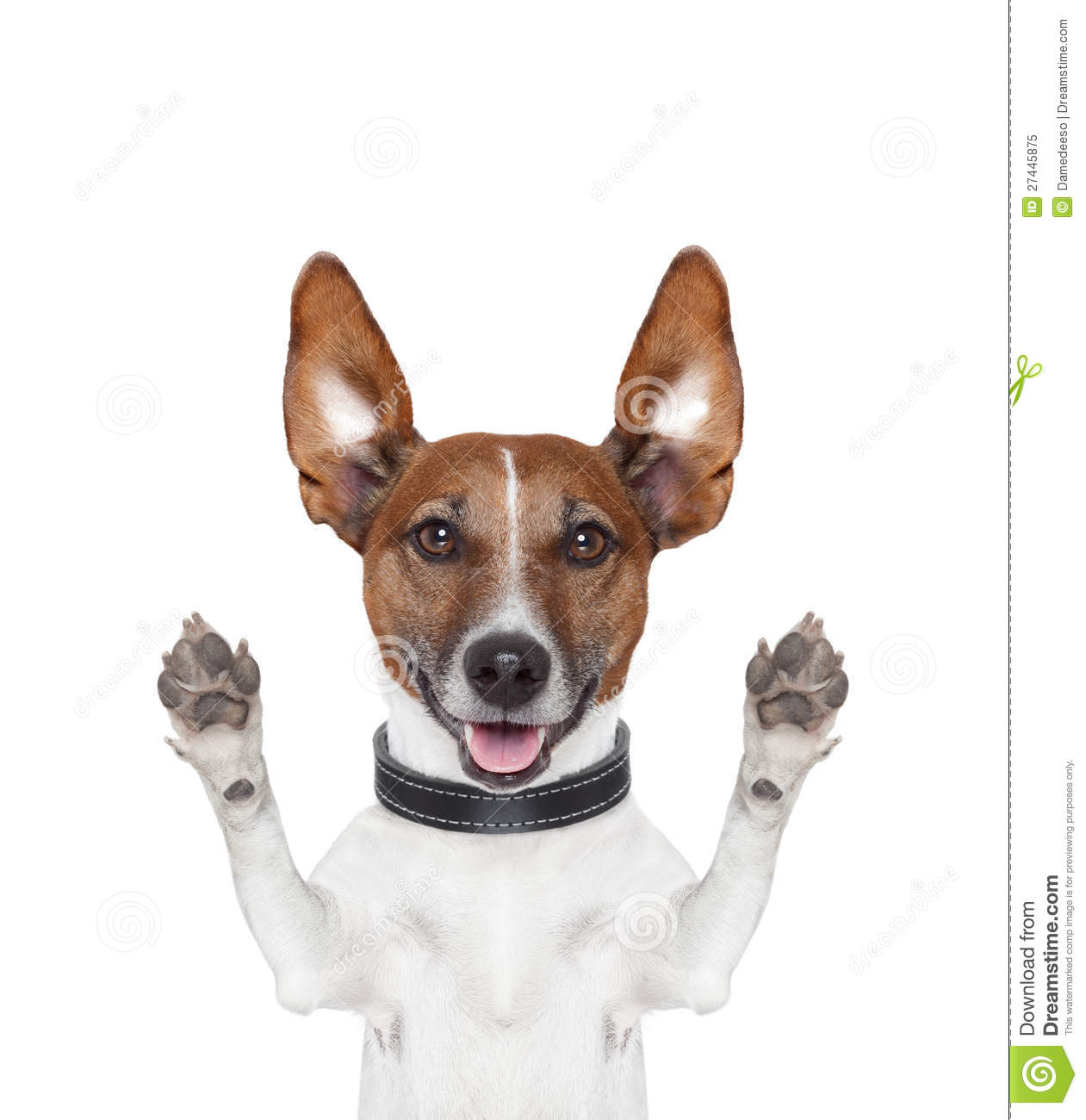 Silly Crazy Paws Up Dog Royalty Free Stock Photo   Image  27445875