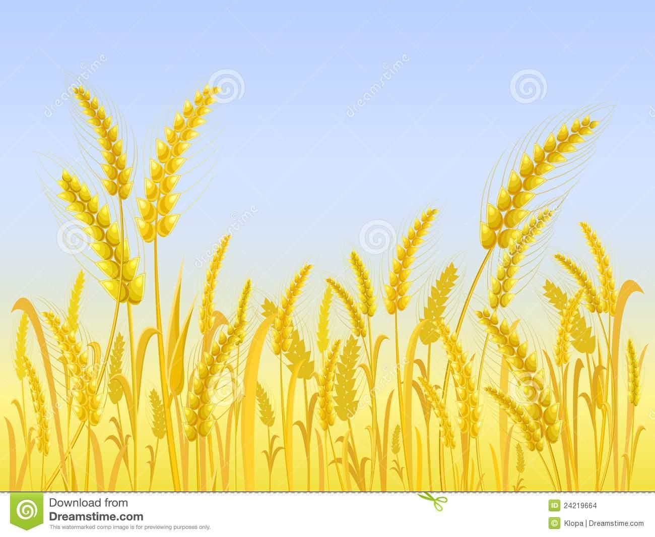 Поле с пшеницей раскраска