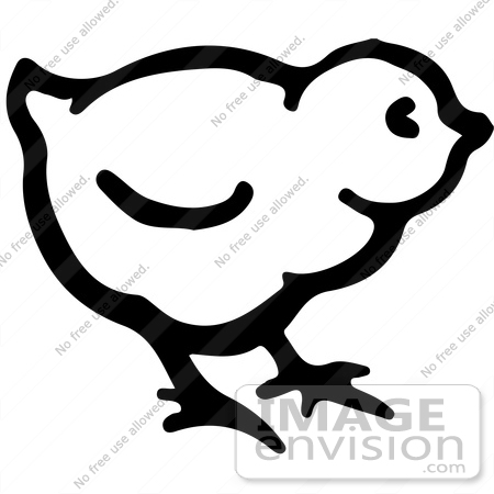 Clipart Of A Cute Baby Chick In Black And White   Royalty Free Vector