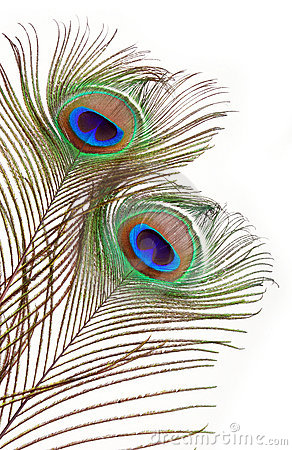 feather abstract border clipart clipart suggest free peacock image clipart free black and white peacock clipart