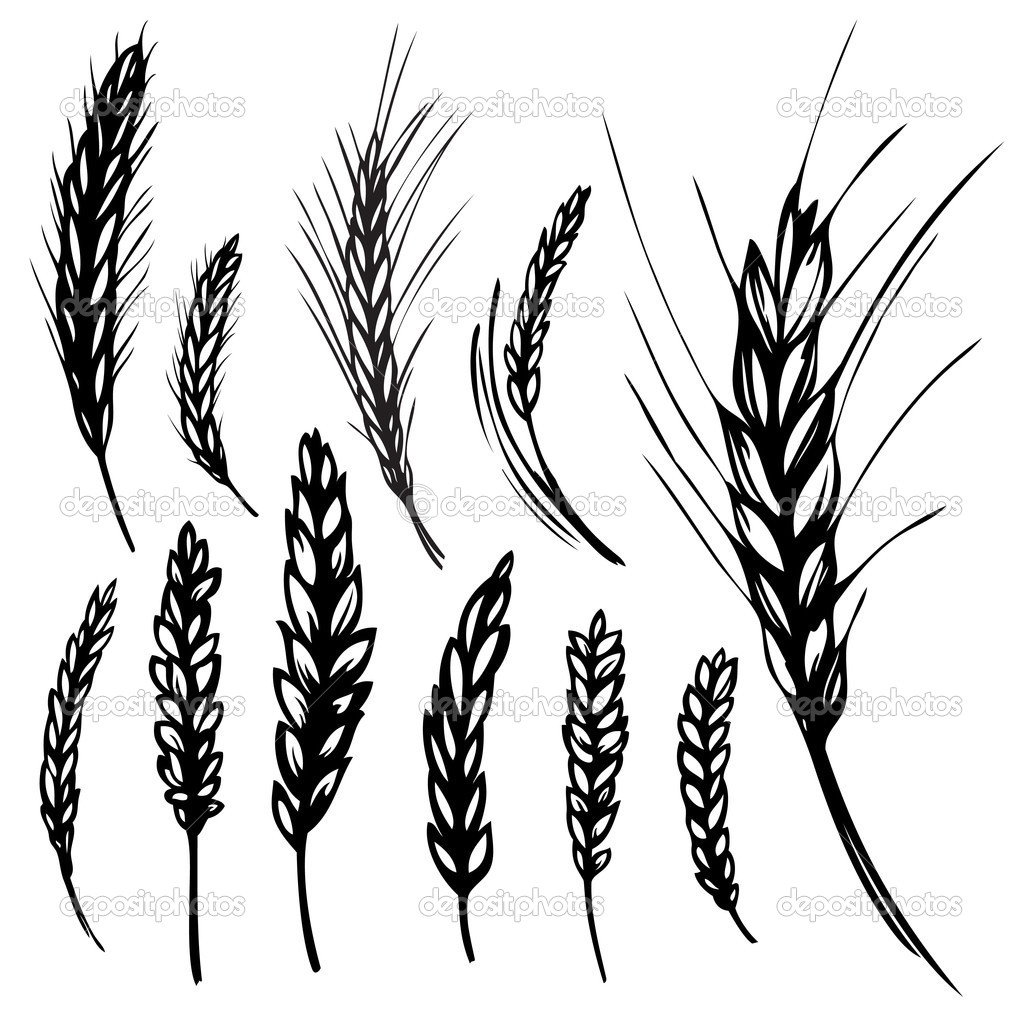 Rye Wheat Stock Vector Valent Ru 3397837 #ya7jnP - Clipart Kid