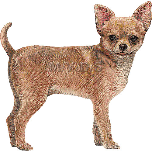 Clip Art Chihuahua Clipart chihuahua clipart kid graphics free clip art
