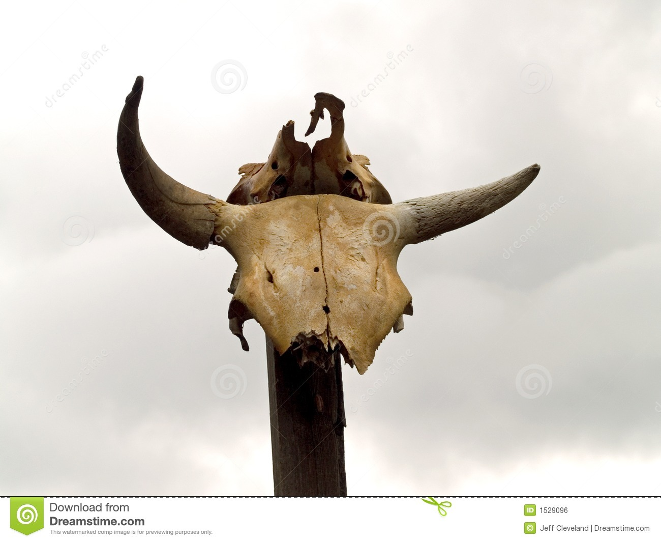 Cow Horns On Post Royalty Free Stock Image   Image  1529096
