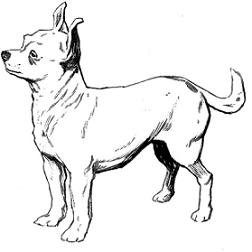 kleurplaat golden retriever pup golden retriever g honden