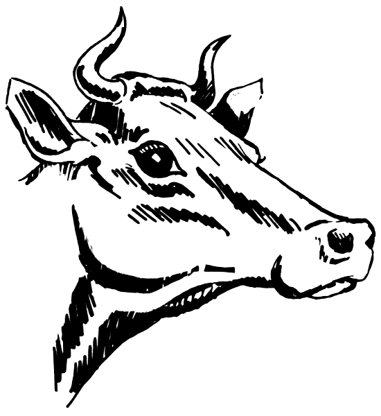 Share Cow With Horns Clipart With You Friends