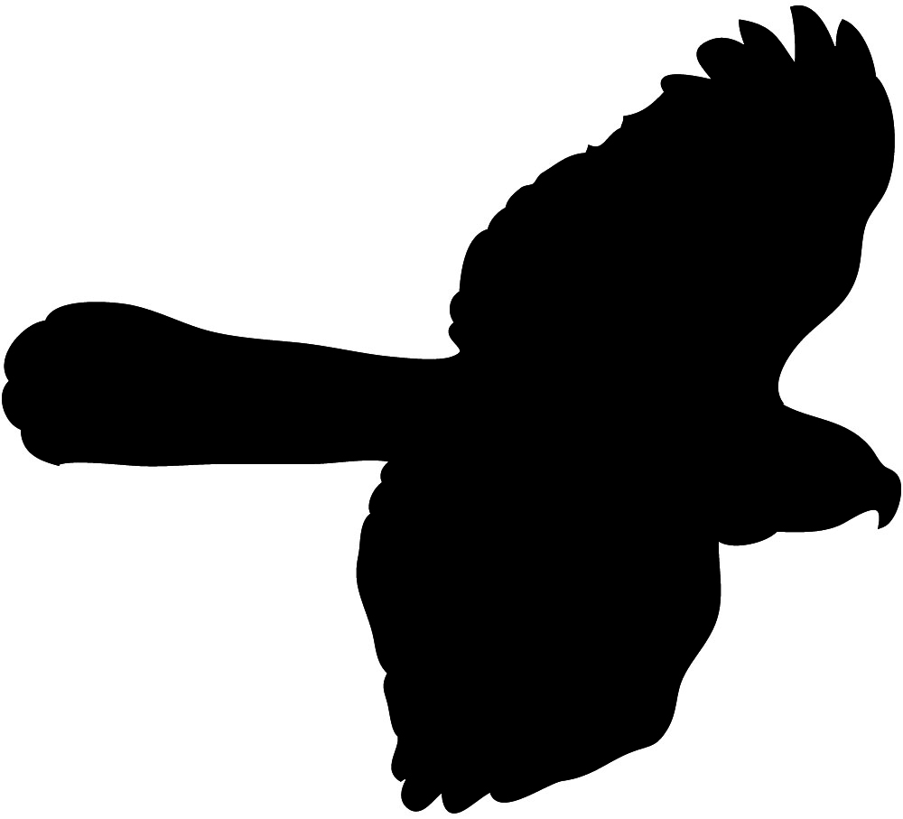 Bird Hunting Clipart   Clipart Panda   Free Clipart Images