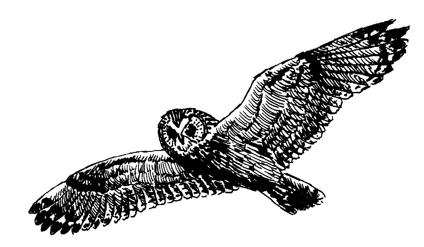Flying Hawk Clipart   Cliparts Co