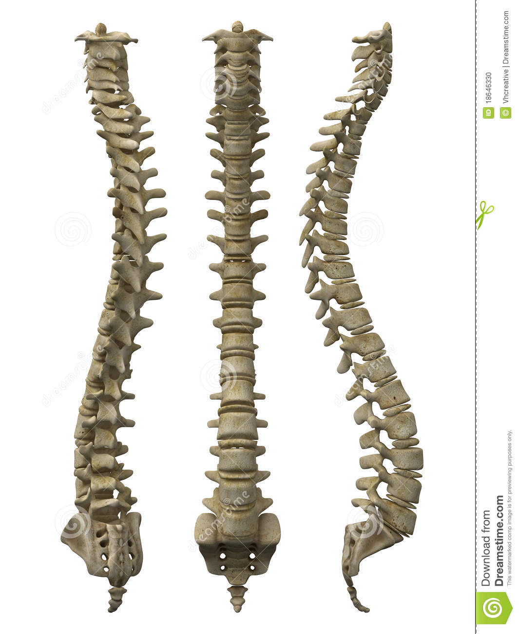 Human Spine Clipart - Clipart Suggest