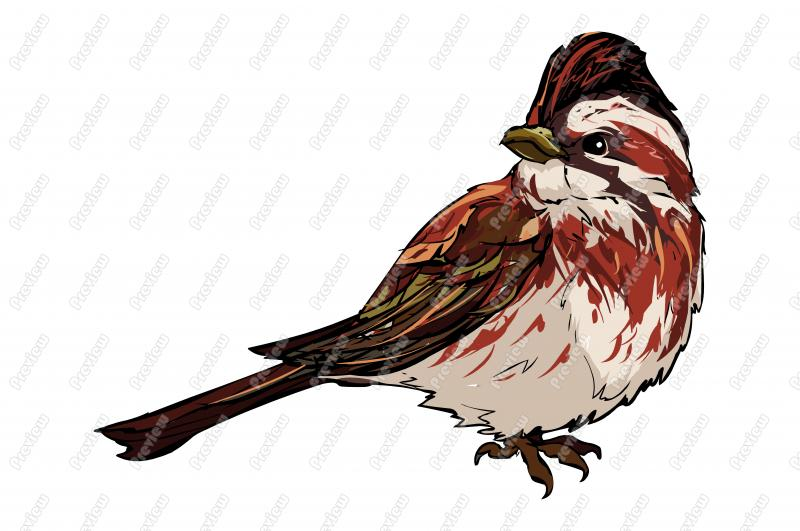 Rustic Bunting Bird Character Clip Art   Royalty Free Clipart