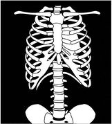 Clip Art X-ray Clipart chest x ray bwhroh clipart kid ray