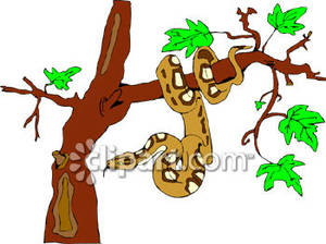 Snake On A Jungle Tree   Royalty Free Clipart Picture