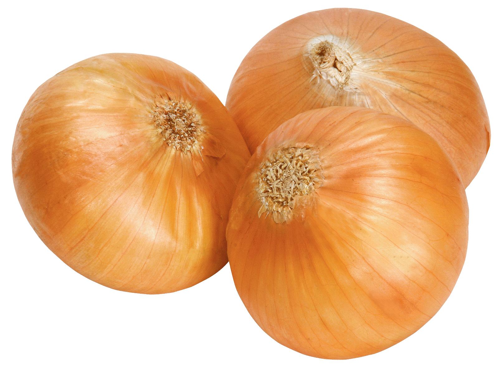Onion Clipart - Clipart Kid