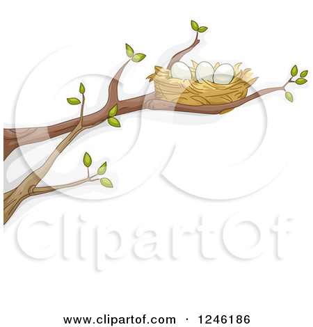 Clipart Of A Bird Nest With Eggs On A Tree Branch   Royalty Free