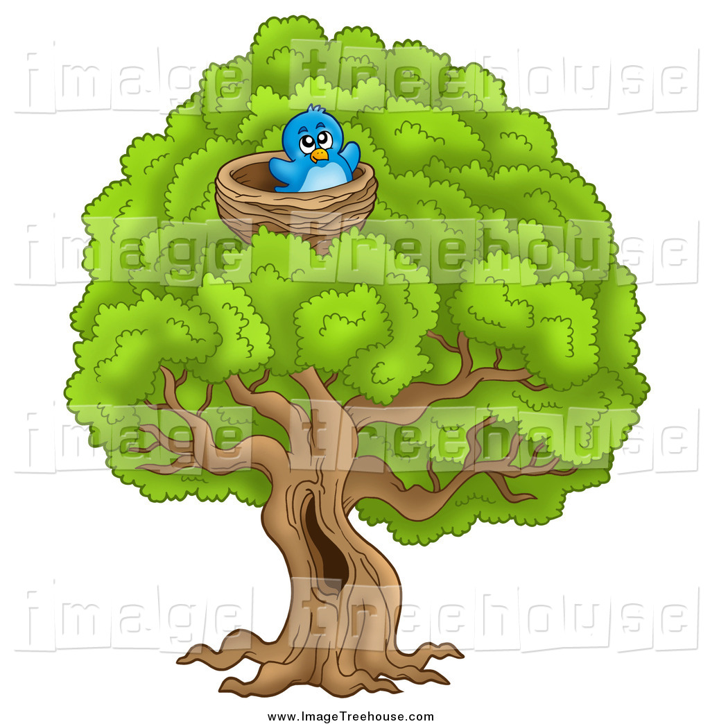 Nest In Tree Clipart This Nest Stock Tree Image