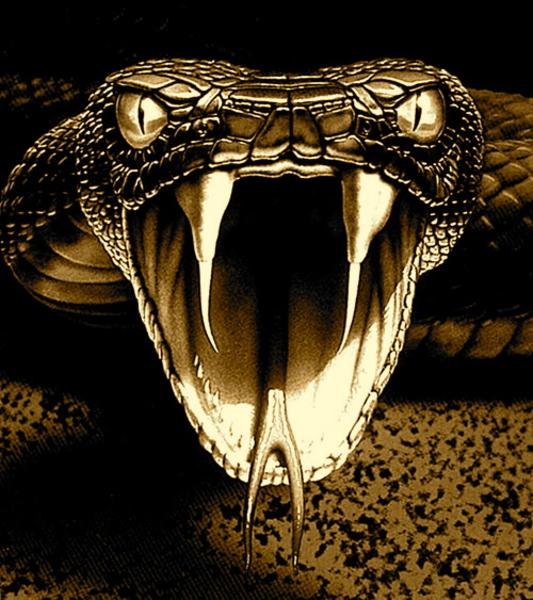 Viper Snake Clipart - Clipart Kid