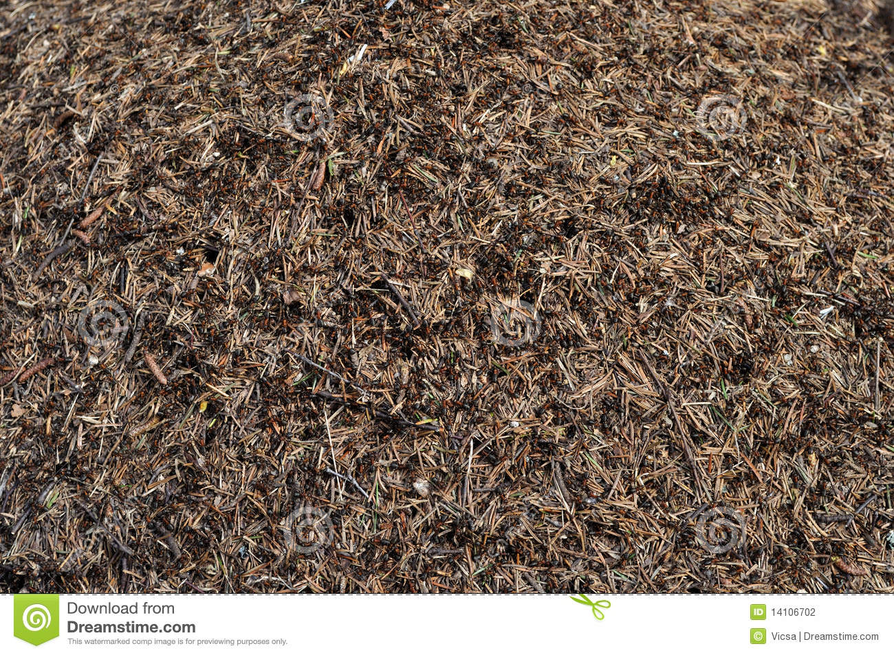 Ant Hill Background Stock Photography   Image  14106702