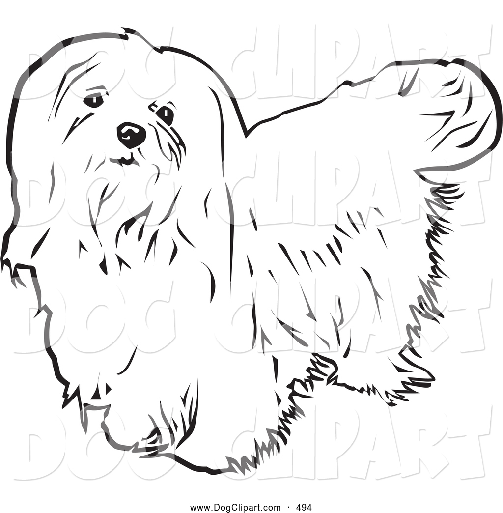 Clip Art Of A Cute And Long Haired Maltese Dog Looking Upwards On A