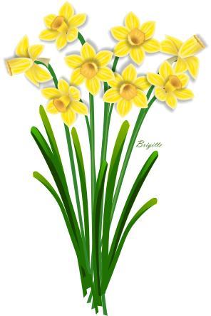 Clip Art Daffodil Clip Art daffodil clipart kid by brigitte