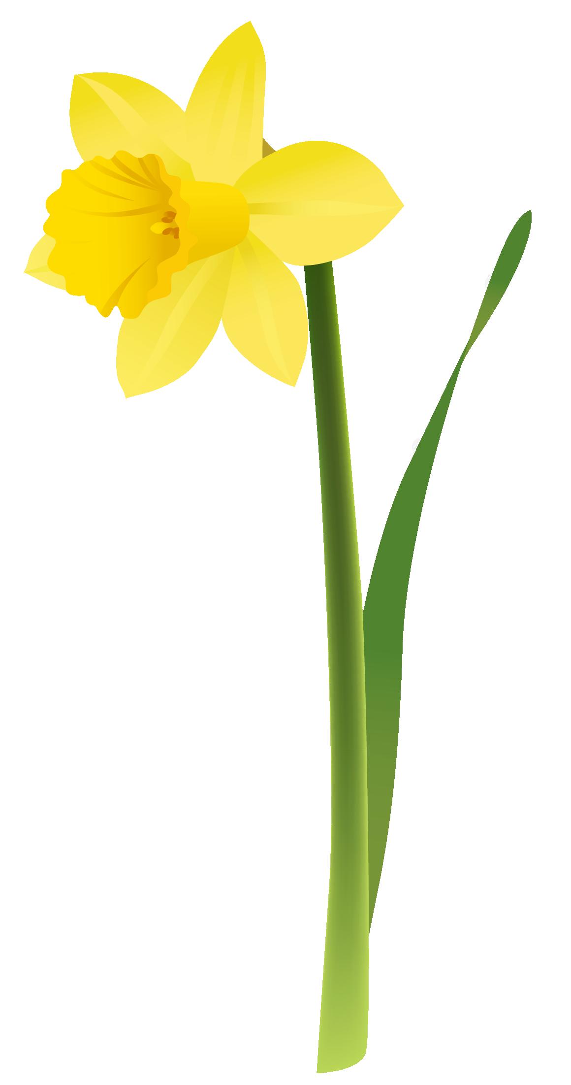 Daffodil Clipart - Clipart Kid